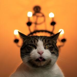 Se fossi un gatto reagirei così al Natale - Attribuzione foto